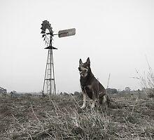 Aussie Dog by Penny Kittel