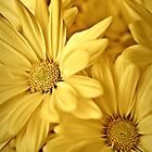 Yellow Daisies-iPad by onyonet photo studios