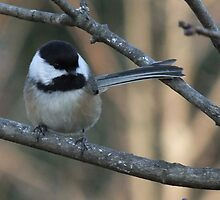 Pretty Chickadee by Tracy Faught