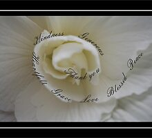 Sympathy Thank You White Rose with Winding Words of Gratitude by Catherine Roberts