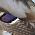Mallerd Duck Feathers 12 by Magic-Moments