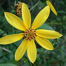 Yellow by boonesarah987