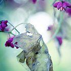 Untitled by Alina Uritskaya