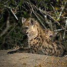Hyena Den by Michael  Moss