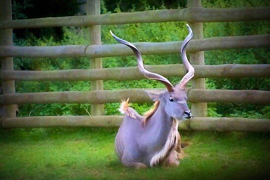 Kudu Karma by missmoneypenny