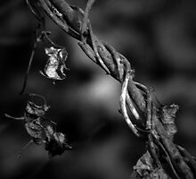 Twig by gjameswyrick