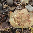 Raindrops on Autumn Leaves by Marie Van Schie