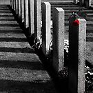 Prague Commonwealth War Cemetery Rose by dozzie