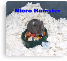 Russian Hamster Tinier Than the Food Bowl Canvas Print