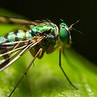 Long Legged Fly by Kerrod Sulter
