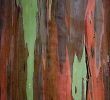 Colorful Bark by mikewheels