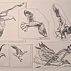 Seagulls, preliminary pen sketches 2012 framed 50x38cm FOR SALE at lizmooregolding@gmail.com by Elizabeth Moore Golding