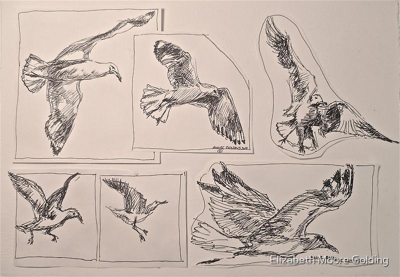 Seagulls, preliminary pen sketches 2012Ⓒ framed 50x38cm FOR SALE at lizmooregolding@gmail.com by Elizabeth Moore Golding