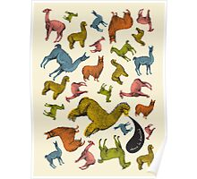 Camelids - Abrace la Diversidad Poster