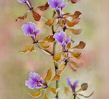Orchid Organza by Jacky Parker