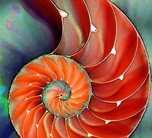 Nautilus Shell - Sea Shells by Sharon Cummings