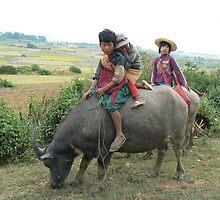 Children on buffalo, Shan State, Myanmar by Intrepidjoan