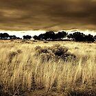 El Morro National Monument - New Mexico by Michael Kannard