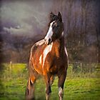 Winter Portrait of Paint Horse &#x27;Paco Picasso&#x27; by Jay Taylor