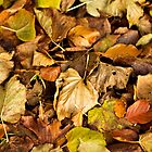 Autumn&#x27;s Carpet by Lynne Morris