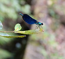 Blue Dragonfly by ollodixital
