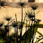 Seedhead Reflections by Michelle Ricketts