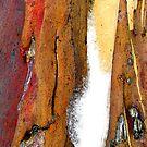 Snowgum Bark by Michelle Ricketts