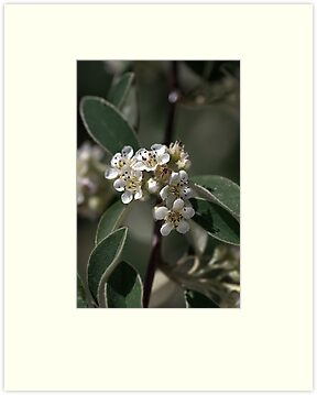 Tiny White Flowers by Joy Watson