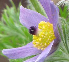Purple Majesty by Cheryl Traxler