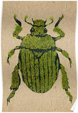 Christmas beetle 03 by Richard Morden