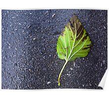 Leaf on Road Poster