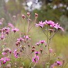 Sun Flare Flowers by Megan Vaughan