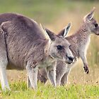 Australian animals by Jennie  Stock