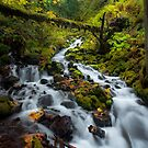 Fairytale Creek by Thomas Dawson