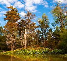 Bayou Teche by Karen  Burgess