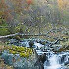 Autumn stream. by Skipnes
