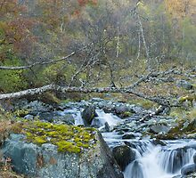Autumn stream. by Skipnes