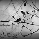 Autumn 2 in Black & White by Dawne Dunton