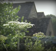 Cow Parsley Farm House by carolhynes