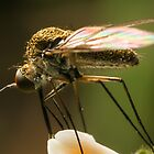 Fly Feeding by Kerrod Sulter