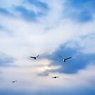 seagulls on sunset by naphotos