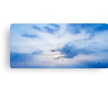seagulls on sunset Canvas Print