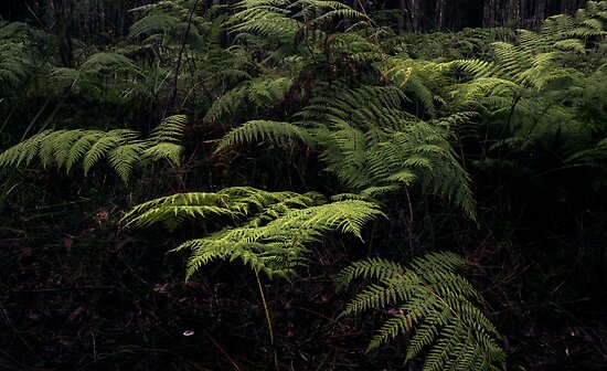 Descend to fern by athex