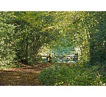 Woodland Path and Gate Photographic Print