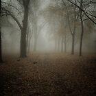 Pathway 001 by Ian Ross Pettigrew