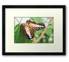 Delicate and Pretty Framed Print