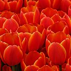 World's Favorite Tulips by Aimee Wilson