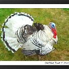 """Talkin Turkey"" by Deb  Badt-Covell"