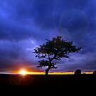 The Tree by Ladyshark