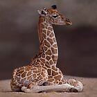 Baby Giraffe iPad Case by Krys Bailey